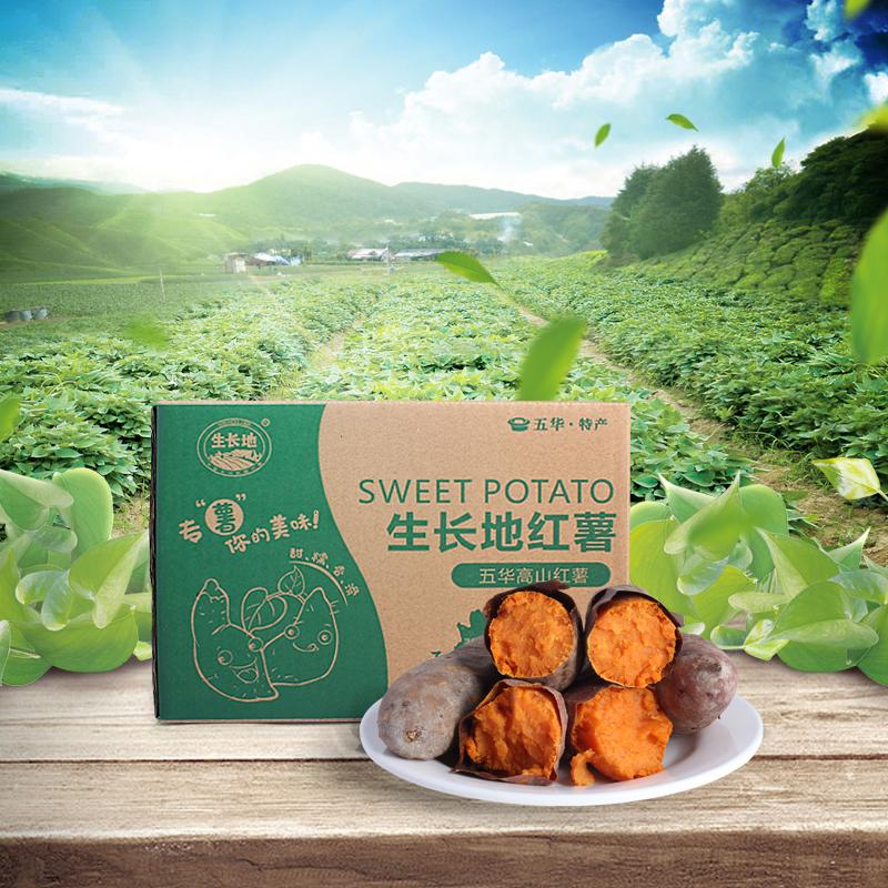 五华高山红薯  新鲜地瓜红薯 礼盒装